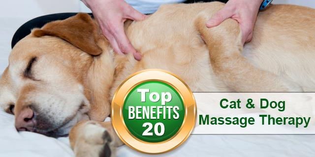 Benefits of Cat and Dog Massage