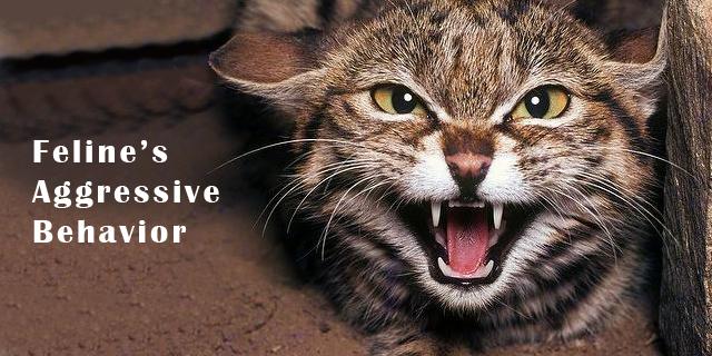 Feline Aggressive