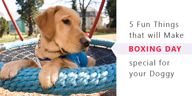 Things To Do With Your Pets At Boxing Day