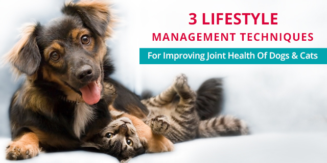 echniques for Improving Joint Health of Dogs & Cats