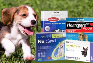 heartworm-treatments-or-preventatives