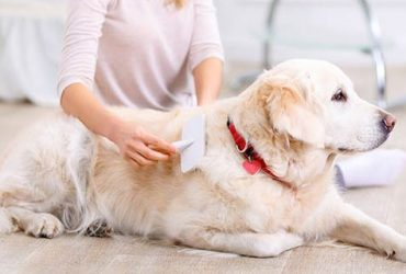 How-to-groom-your-dog-at-home-