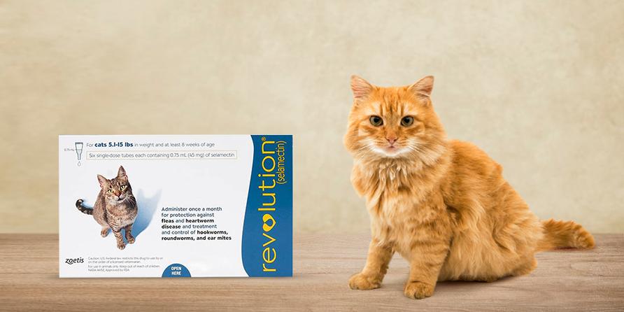 Revolution For Cats