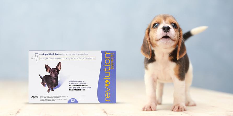 Revolution For Dog
