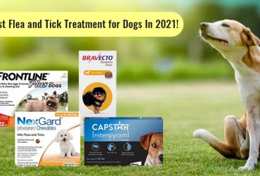 Best Flea and Tick treatments for Dogs In 2021!
