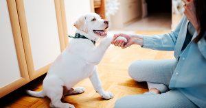 Teach Your Pet A New Trick
